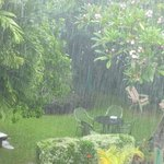 Gardens during a brief Tropical Shower