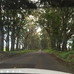 Maluhia Road Tree Tunnel