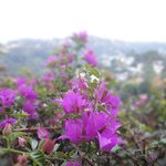Flower with Kandy City Background