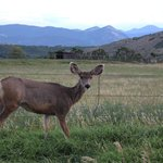 Deer, turkey, bear, fish, elk, marmots, wildflowers, sunsets --we really got to experience CO