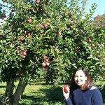 Love the apples ar Masker Orchard.