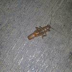 Roach pic 1