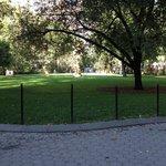 Madison Square Park - more green area