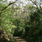 Jungle, Playa Quesera, Curu, Costa Rica
