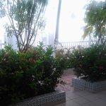 Plants at entrance