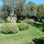 Jardin devant une partie des chambres