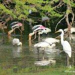 a paradise for birds....