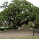 Landa Founders Oak