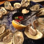 raw oysters - very fresh