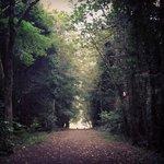 Stunning woods to wonder freely.