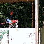 Spectacle des perroquets