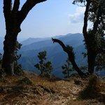 Binsar Views
