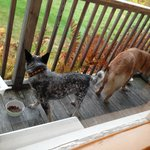 Our dogs dining al fresco on the deck