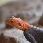 les reptiles n'y sont pas très farouches