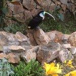 pumapungo- toucan