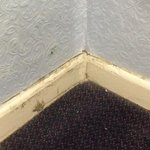 Mould at floor level