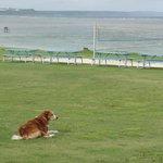 太平洋と足の悪い犬