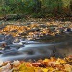 Creek in Edwards Gardens Toronto