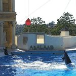 Adaland and dolphins