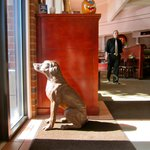 This sculptured pooch greets you at the entrance