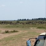 Dream Kenya Safaris Foto