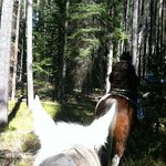 Juliet in the Lodgepole Pine forest