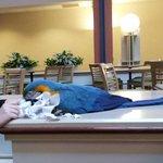 Emmy teh resident Macaw