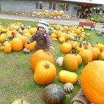 Fall @ Garden Cafe PHF