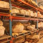 Fossils encaed in plaster