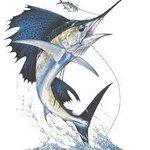 BDN Sportfishing