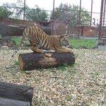 Gyongyosi Allatkert, Zoo