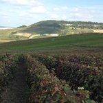 The tour vineyards