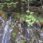 вода течет прямо под травой сплошным потоком