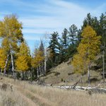 fall colors along the Sawmill trail
