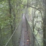 hike in the rain forest on suspended canopy bridges