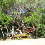 bosque y amacas