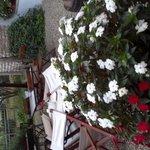 giardino curatissimo