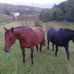 MISSI & NOTTE i cavalli del b&b