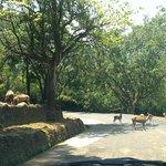 The safari day track