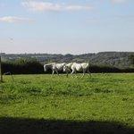 Foto de Little Widefield Farm