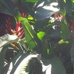 Bellisima flora