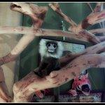 Chambre d'Autres et Suite du Merle Blanc Foto