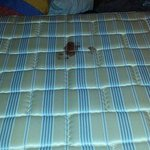 the blood stained mattress(not our blood)
