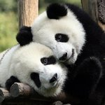 Edinburgh Zoo - Come see the Pandas only 10 minutes away