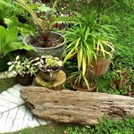 Driftwood and plants