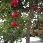 fresh pomegranate anyone......
