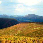 Beauty of the Long Mynd