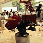 Las bellas flores del dasuyuno