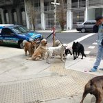 Even the dogs in the neighborhood were friendly & well behaved -this group waits for their walk