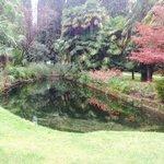 Toller Park